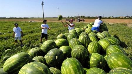 Bracciante stroncato dal caldo: imprenditore agricolo e caporale a processo
