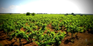 Annata agraria, Coldiretti: PLV – 4,62%