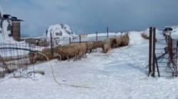 Maltempo, Coldiretti: 'animali in sofferenza'