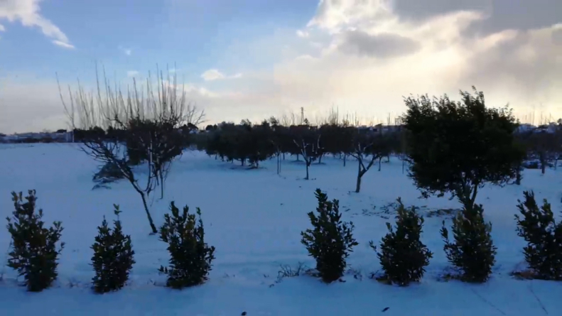 Neve e gelo, danni importanti a coltivazioni ed allevamenti