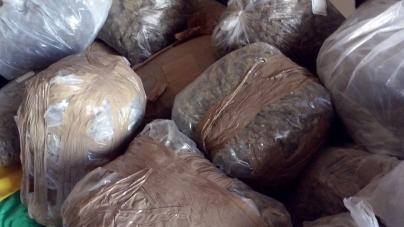 Maxi sequestro di marijuana sulle coste salentine