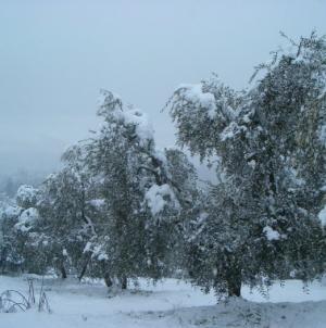 Emergenza neve: i dati, a cura della Protezione Civile, relativi agli interventi