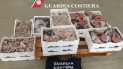 Pesca di frodo e prodotti ittici venduti illegalmente