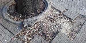 Buche, dossi e alberi non potati in viale Oronzo Quarta