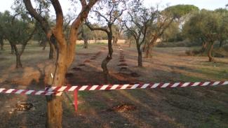 Gasdotto Tap, 'espianto ulivi illegittimo'
