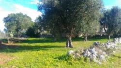 Nasce in Puglia la Banca della Terra