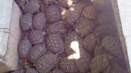 Sequestrate 298 tartarughe