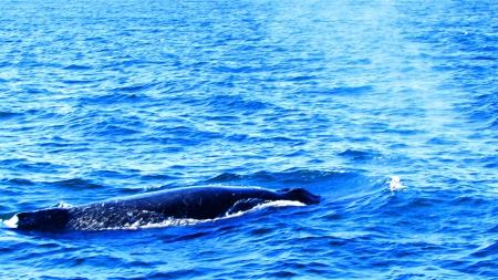 Balena di dieci metri spiaggiata lungo la costa