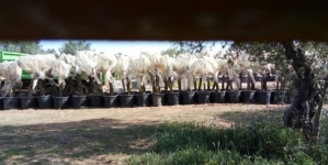 Gasdotto Tap, la Procura di Lecce sequestra un'area del cantiere
