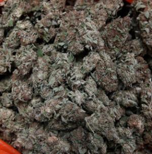 Beccato con 3 kg di marijuana nello zaino: arrestato 19enne