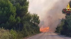 Inferno di fuoco all'Oasi WWF delle Cesine: distrutti 20 ettari