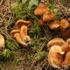 Pranzo a base di funghi tossici: famiglia di 9 persone finisce in ospedale