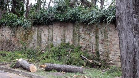 Anziano muore travolto da un tronco di pino