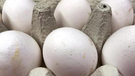 Fipronil, 4mila uova sequestrate in Salento