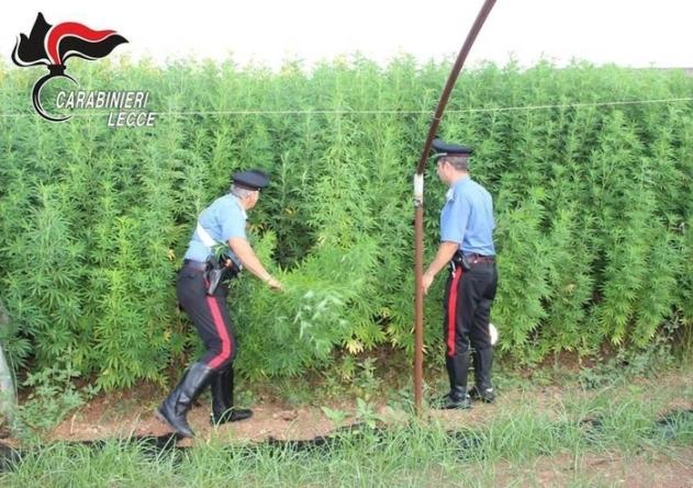 Piantagione marijuana sequestrata Lecce