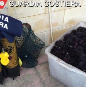 Ricci pescati in area marina protetta: maxi sequestro della Guardia Costiera