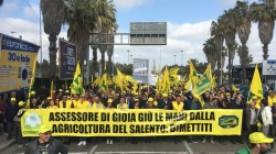 Xylella: mondo agricolo in protesta a Lecce con i trattori