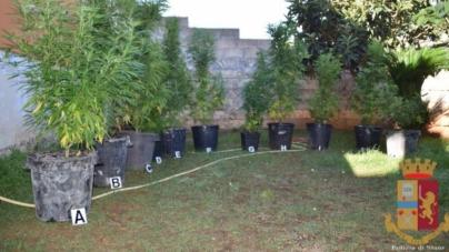 Piantagione di marijuana nel giardino di casa: arrestato 40enne