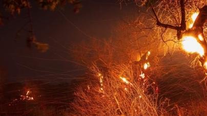 Rogo nella notte: in fiamme 300 ulivi morti per la Xylella