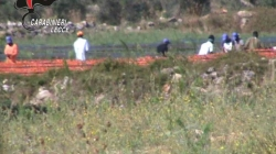 Sfruttamento nella raccolta dei pomodori: denunciate due persone