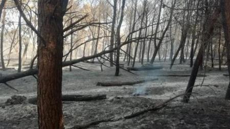 A fuoco 100 ettari di macchia nella Baia delle Orte