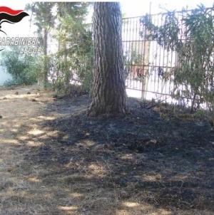 Incendiano un albero in un parco comunale: denunciati due giovani