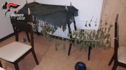 Piante di marijuana in un terreno e droga in casa: denunciato 32enne