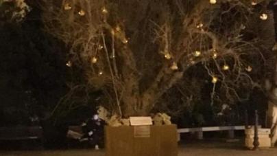 Xylella, a Melissano l'albero di Natale in piazza è un ulivo disseccato